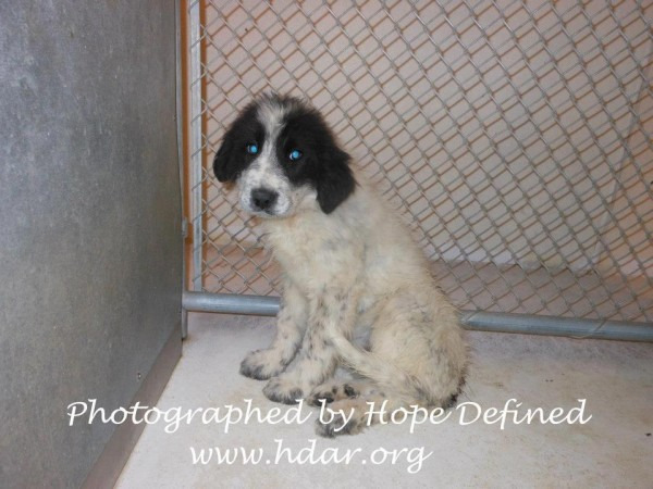 Hope Defined Portales Mountain Pet Rescue Foster Adopt