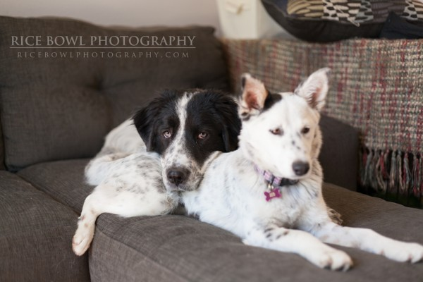 Colorado Pet Photography