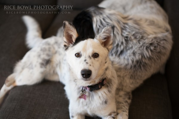 Colorado Pet Photographer